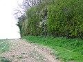 Woodland edge, Breamore Down - geograph.org.uk - 1263754.jpg