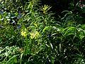Woodland edge - Flickr - peganum.jpg