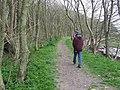 Woodland footpath - geograph.org.uk - 604302.jpg