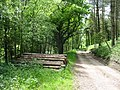 Woodland ride, Whitty Hill - geograph.org.uk - 177257.jpg