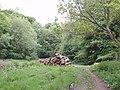 Woodpile in Fire Wood - geograph.org.uk - 819080.jpg