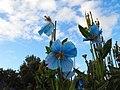 World's most northerly botanic garden - Akureyri - Iceland - panoramio (2).jpg