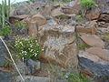 Zona Arqueológica Lomo Gordo.jpg