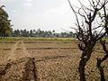 (ಕೃಷಿ) farming.jpg