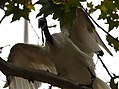 (1)Ibis Sydney 045.jpg
