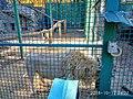 «Фельдман-Екопарк»-регіональний ландшафтний парк у Дергачівському районі Харківської області(7).jpg