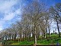 Árboles desnudos - panoramio.jpg