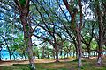 Árvores.jpg