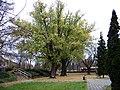Čakovice, sady Husitské revoluce, stromy.jpg