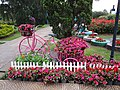 Đà Lạt flower park (August 6, 2018) (43307346274).jpg