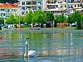 Πελεκάνος στην λίμνη της Καστοριάς.jpg