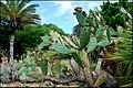 Ботанический сад Пинья де роса - panoramio (1).jpg