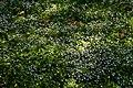 Весна у Стрийському парку. Зелена трава.jpg