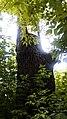 Віковий дуб.З.п. «Рубежівський» 04.jpg