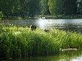 Гатчинский парк. Паромная пристань05.jpg