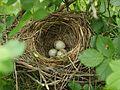 Гнездо - panoramio.jpg