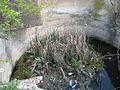 Дендрологічний парк 141.jpg