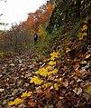 Есен Екопътека Вазов път , гара Бов.jpg