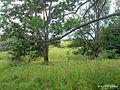 Ласица 1 - panoramio.jpg