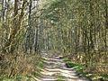 Лесные тени - panoramio.jpg