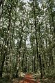 Миљаковачка шума, лето.jpg