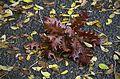 """Осенний """"букет"""" (12157668034).jpg"""