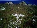 Острів Зміїний ранньою весною.jpg