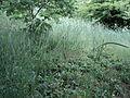 Парк шума Гази Баба во мај (109).JPG