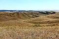 Перелески на склонах Козьих гор - panoramio.jpg