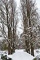 Сирецький дендрологічний парк, Київ 002.jpg