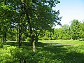 Стрельна, Орловский парк, пруд с островом02.jpg