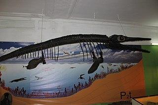 <i>Undorosaurus</i> genus of reptiles (fossil)
