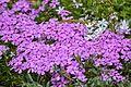 Флора в Ботанічному 4.jpeg