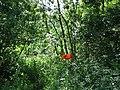 Արզականի և Մեղրաձորի արգելավայր-133.jpg
