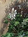 זיהוי צמח + פרח 1, 26.3.18.jpg