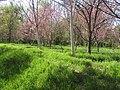 بهار - نصرآباد - panoramio - Farid Atar.jpg