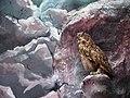 حیوانات تاکسی درمی شده - موزه تاریخ طبیعی شهر قم 19.jpg
