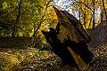 پاییزدر ایران-قاهان قم-Autumn in iran-qom 05.jpg