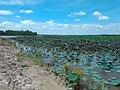ทิวทัศน์ หนองกอมเกาะ - panoramio (4).jpg