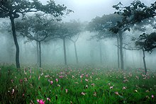 wiki list national parks thailand