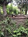 大熊猫进食照片.jpg