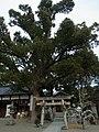 歯神社(柴籬神社境内社) 松原市上田7丁目 2012.1.14 - panoramio.jpg