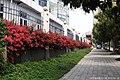 深圳市第三高级中学 red wall - panoramio.jpg