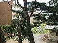 石巻市立桃生中学校 - panoramio.jpg