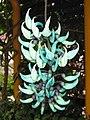 綠玉藤 Strongylodon macrobotrys -香港動植物公園 Hong Kong Botanical Garden- (9222669910).jpg