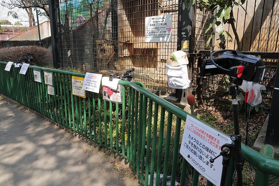 羽村市動物公園 ニコ生 2017 (32782507624)