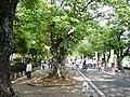 豊川公園 - panoramio.jpg