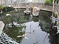 鯉池.jpg