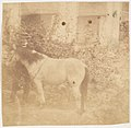 -Man and Horse, Government House, Allahabad- MET DP146128.jpg