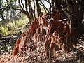 ... termite mound (6780652911).jpg
